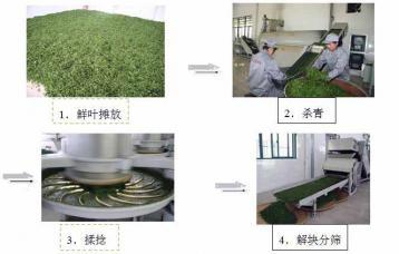 炒青绿茶初制工艺流程图解|绿茶加工
