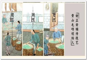 黄山毛峰制作工艺|名优绿茶的制作