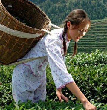 安化黑茶种类|安化黑茶品种大全
