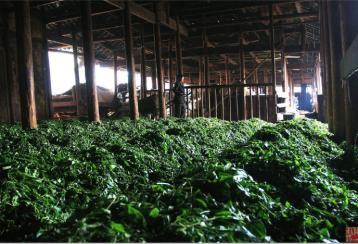 黑茶制造工艺|黑茶制作工艺
