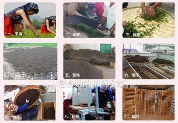 广西六堡茶加工技术|黑茶工艺