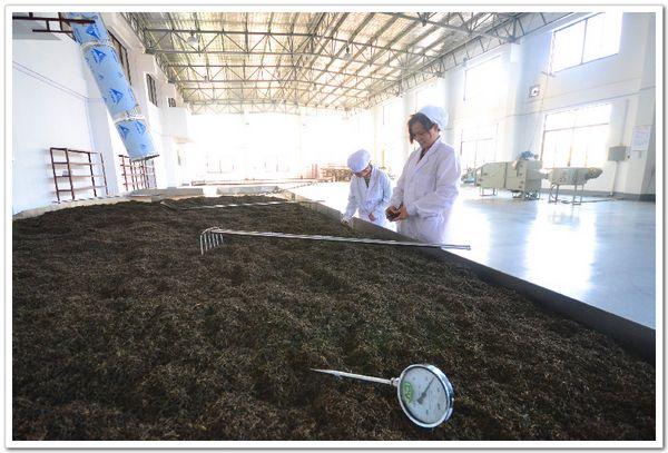 黑茶渥堆的作用都有哪些值得注意的地方?
