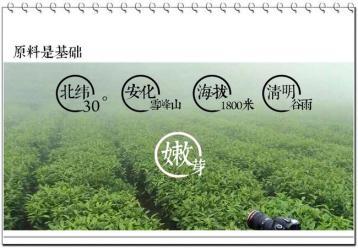 如何正确选购不同品种的黑茶|黑茶知识