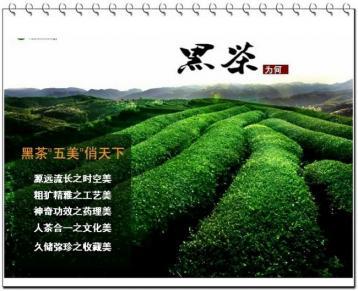 专家教您怎样挑选正宗的茯砖茶|茯砖茶选购