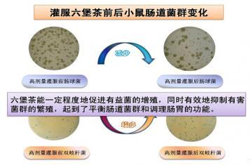 古法六堡茶的降脂减肥功效|六堡茶减肥