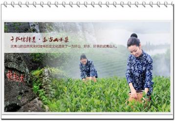 武夷岩茶的制作工艺|岩茶传统手工制法