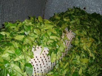 武夷岩茶做青工艺|武夷岩茶制作工艺
