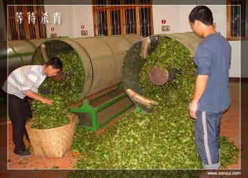 武夷岩茶杀青工艺|武夷岩茶制作工艺