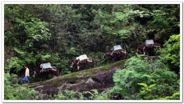 茶路风云|《走遍中国——武夷山茶文化》解说词