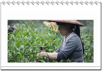 武夷岩茶的品质由什么构成?|岩茶知识