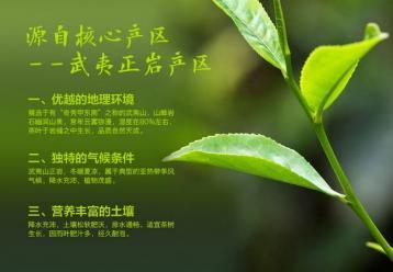 大红袍知识|武夷岩茶