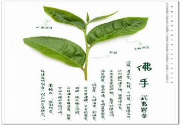 武夷岩茶佛手茶叶图解|岩茶图片素材