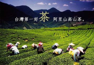 台湾乌龙茶主要品种|台湾乌龙茶有哪些