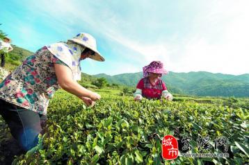 第六届中国茶都安溪国际茶业博览会支招|乌龙茶市场