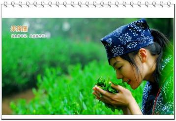 2015年我国五大乌龙茶品牌排行榜
