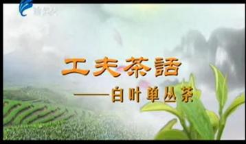 白叶单丛茶——工夫茶话|乌龙茶视频