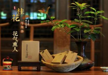 桂花乌龙茶展示图片--湜怀|桂花乌龙茶图片