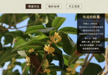 桂花乌龙茶制作图片|乌龙茶图片