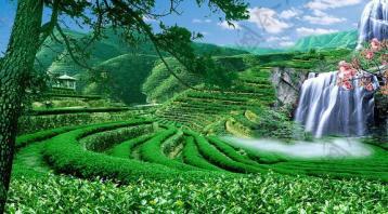 普洱茶六大茶山之革登茶山|普洱茶产地