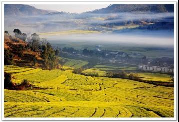 云南临沧:普洱茶的故乡|普洱茶发源产地