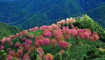 云南无量山自然保护区|普洱茶产地