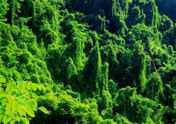 景谷普洱茶文化的历史发展