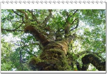 云南普洱茶茶树有哪些种类|普洱茶茶树种类及特点