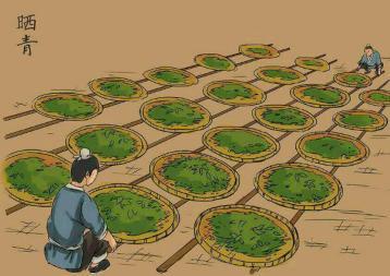 普洱茶的制作与流程|普洱茶制作工艺
