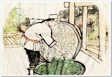 生普洱散茶的加工|普洱茶的生产制作程序