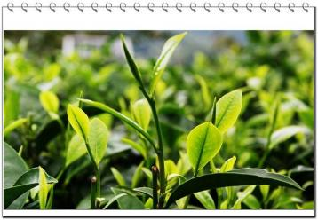 普洱茶品牌文化的核心价值观|普洱茶文化