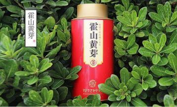 霍山黄芽品鉴及品质特点|黄茶审评