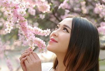 喝桃花茶可以美容瘦身吗?|桃花茶减肥