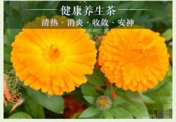 金盏菊花茶图片|花茶图片