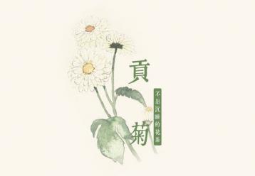 黄山贡菊花茶图片|花茶图片