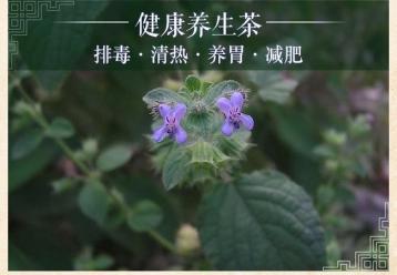 兰香子茶图片|花草茶图片素材
