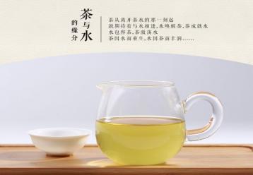 如何选购铁观音春茶|铁观音鉴别