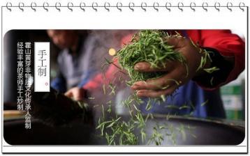 黄茶的初制原理|黄茶制作工艺
