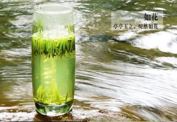 蒙顶黄芽的传说|黄茶文化