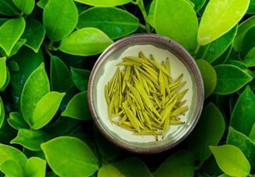 黄茶有哪些种类|黄茶有哪些品种