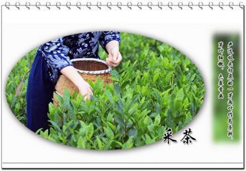 黄大茶的制作方法|黄茶工艺