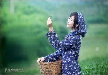 早春茶采制工艺|茶叶加工工艺