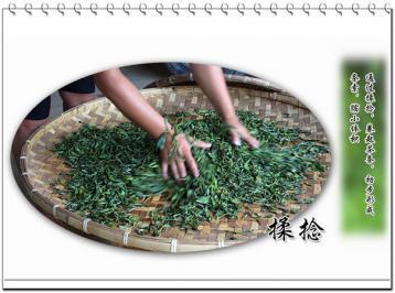 揉捻工艺的原理及作用|手工制茶