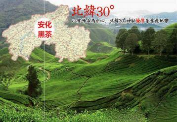湖南黑茶的制作工艺|茶叶制作