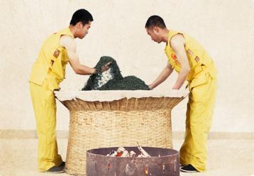 六安瓜片炒制工艺|茶叶加工