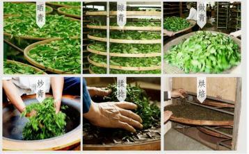 凤凰单枞茶的制作|茶叶加工工艺