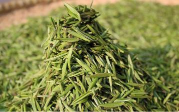 解析黄茶加工过程中的理化变化|茶叶生化