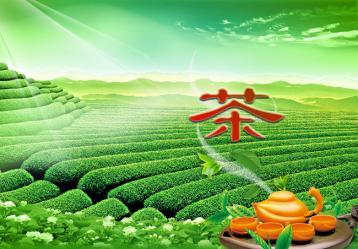 基地茶园管理细则(部分)|茶园管理制度