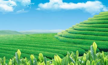 建立现代茶园管理制度|生态茶园管理
