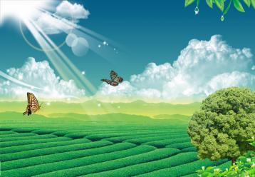 浅谈台风天气对茶叶种植的利与弊|茶叶论文