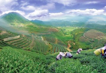 茶叶种植的土地适宜性的几点思考|茶叶论文